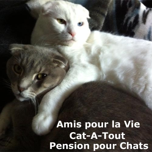 pension pour chat Mirabel